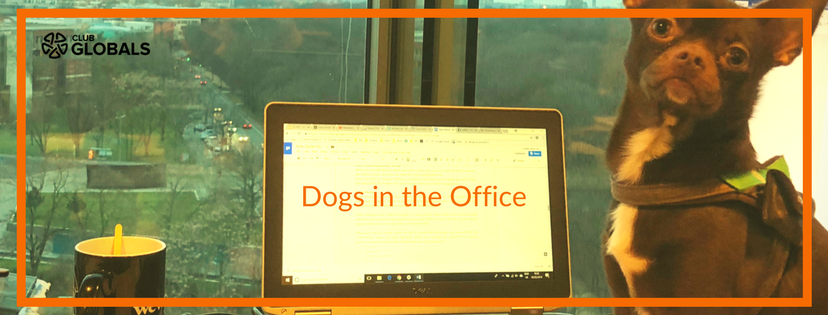 Dogs in the office Club GLOBALS